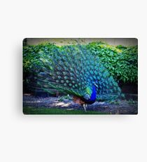Who are you trying to impress?? Canvas Print