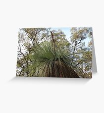 Australian Native Grass Tree Greeting Card
