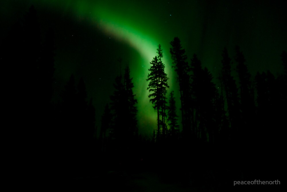 Northern Lights in our Yard by peaceofthenorth