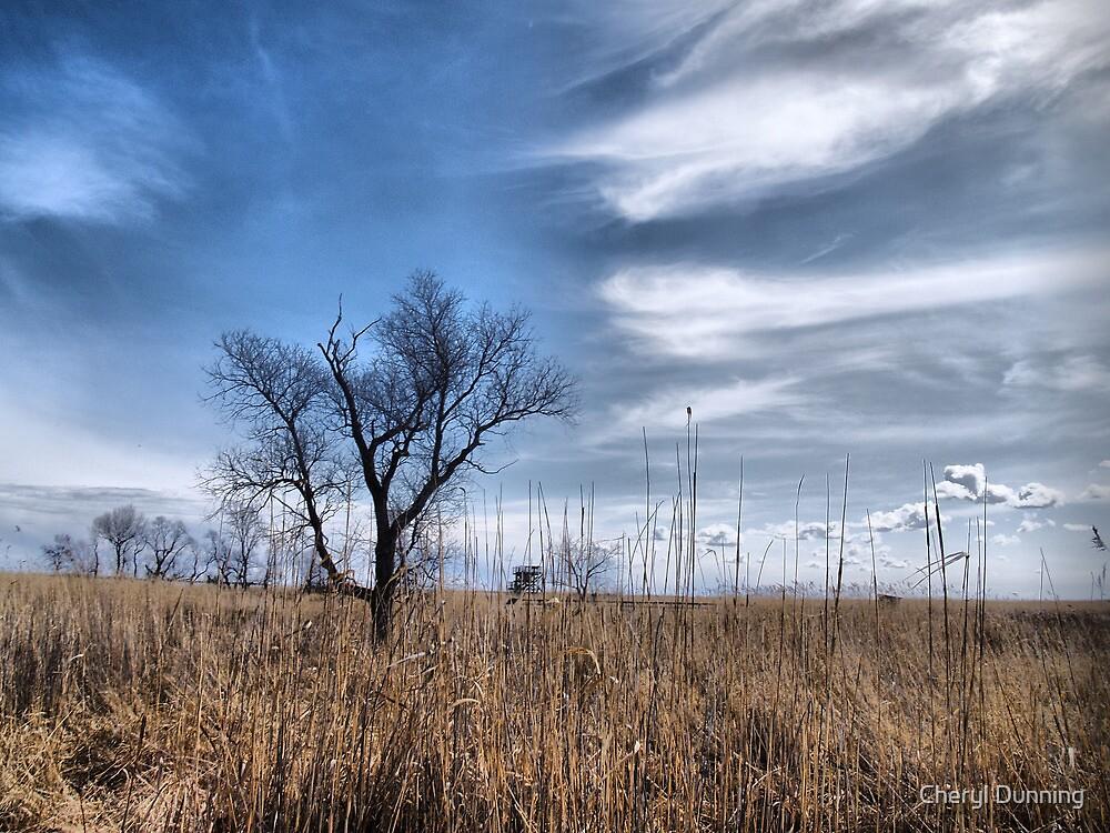 marsh view by Cheryl Dunning