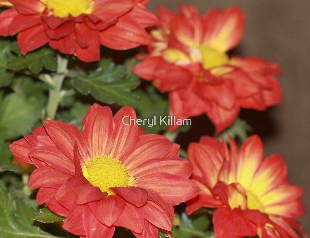 Orange Fall Flowers by Cheryl Killam