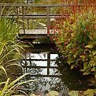 Reflection Pool  by John Gaffen