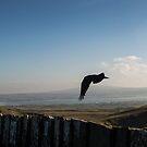 Blackbird in Flight by Jordyn Kirk