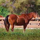A Horse is a Horse by Michiale