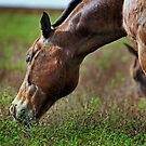 Grazing on the Estate by Michiale