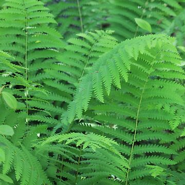 Lush Ferns by Violetentity