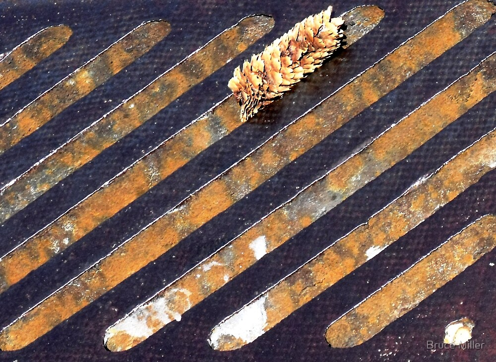 pine cone over a sewer by Bruce Miller