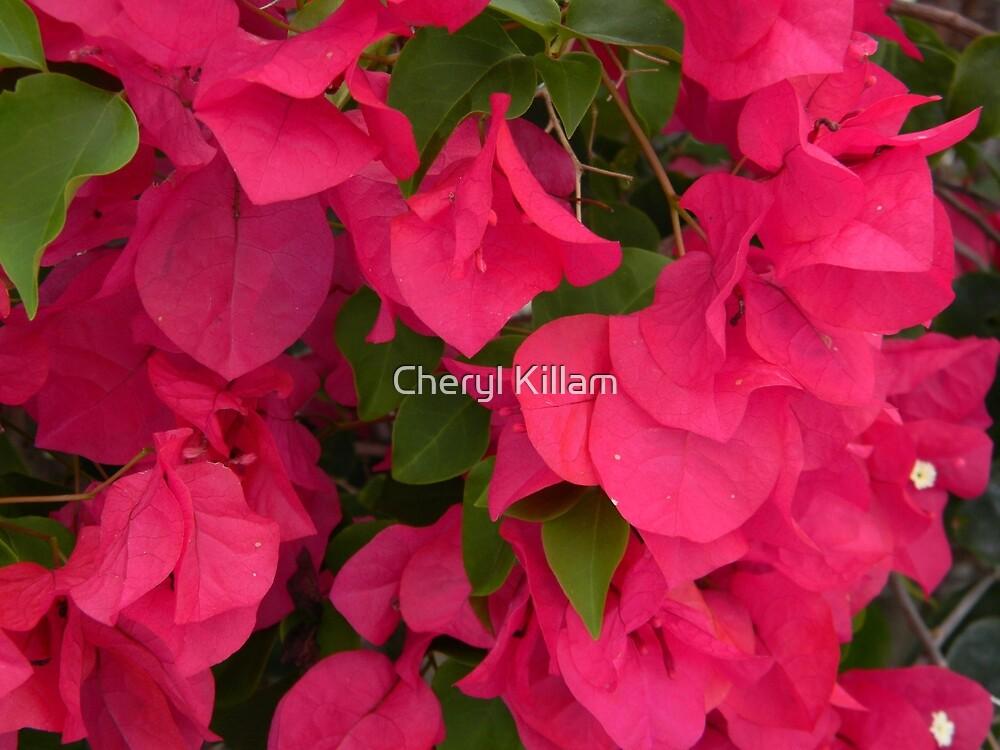 Red is Best by Cheryl Killam