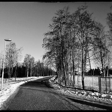 A Frosty Winter Sunny Morning walking in nature black and white photograph by paulmcnam