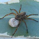Wolf Spider lugging Eggsac by iamelmana