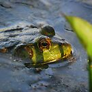 Frog made right decision...... by Sunshinesmile83