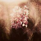 «Naturaleza abstracta» de baxiaart