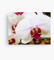 Tiger Orchid. Canvas Print