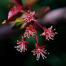 Tiny Blossoms by Nancy Stafford