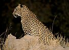 Female Leopard by Michael  Moss
