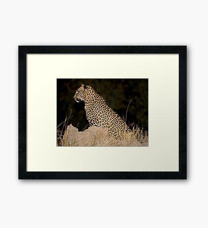 Female Leopard Framed Print