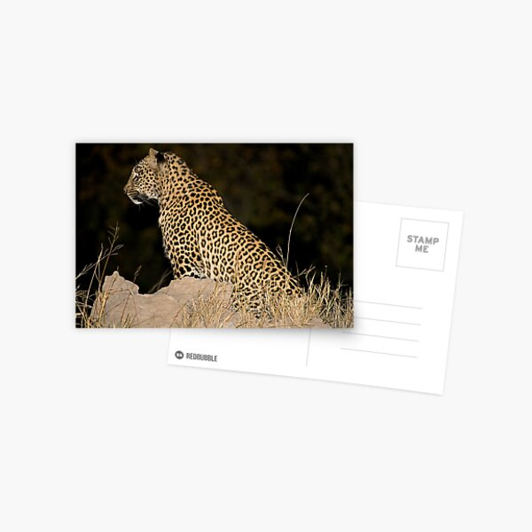 Female Leopard Postcard