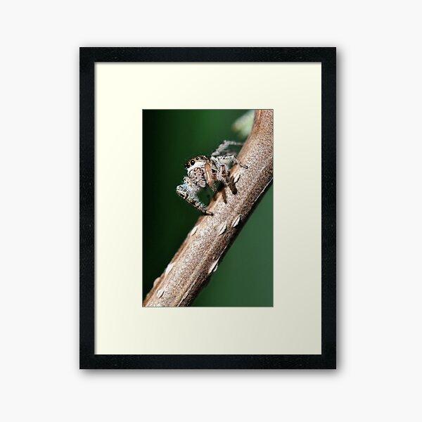 Eye on the prey Framed Art Print