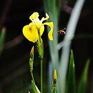 Wild Flower & Honey Bee - Nature and Wildlife Original photographic design Merchandise by VIDDAtees