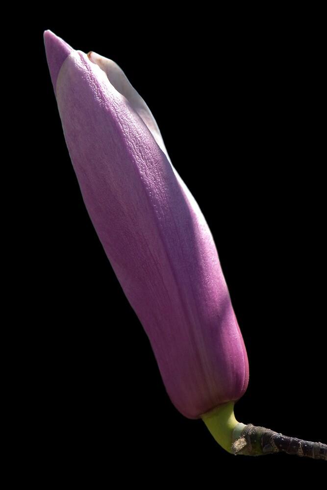 Flower To Be by Jean-Pierre Ducondi