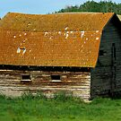 This Old Barn 1 by KS-Photography