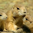 We Are Family by KS-Photography