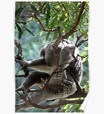 Sleeping in a Tree Poster