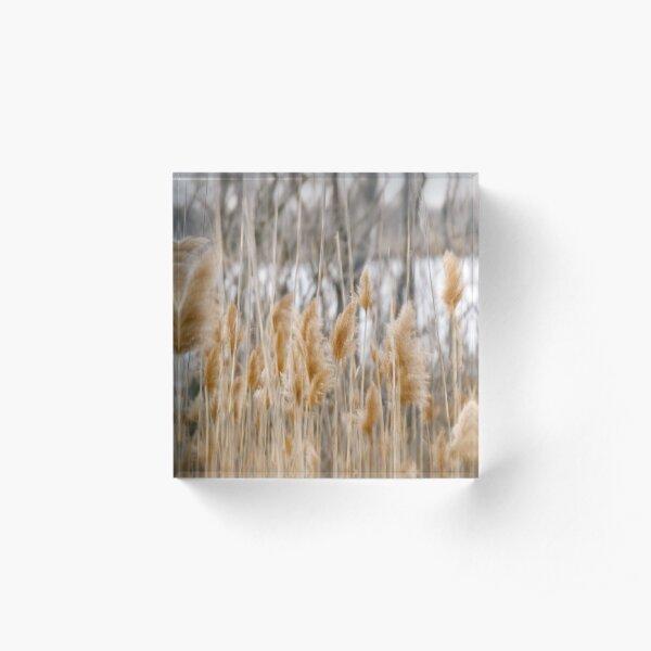 Reeds of Winter Acrylic Block