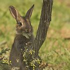 Baby rabbit by Sue Purveur