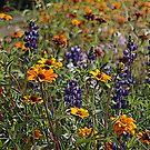 Field of Flowers by Chappy