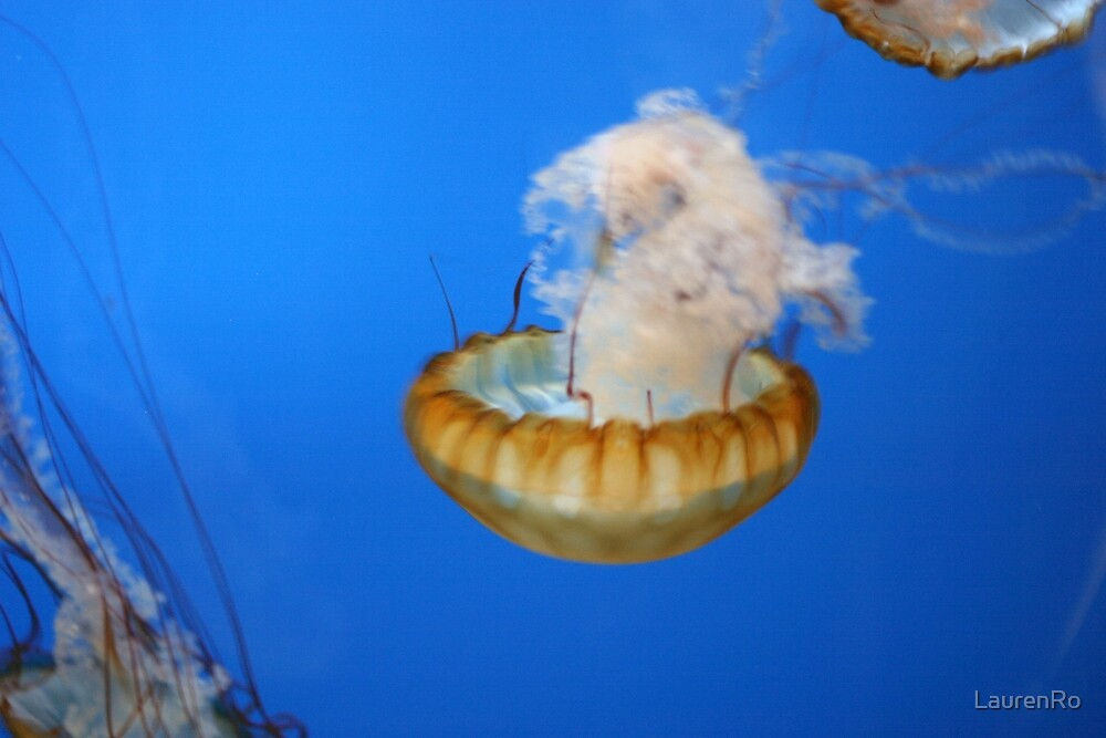 Jelly fish by LaurenRo