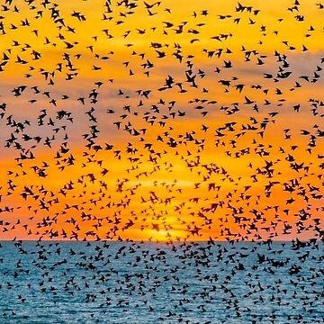 Un cielo lleno de pájaros 2 de chuckirina