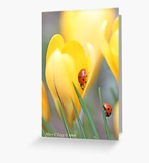 Ladybird beetles  on crocus. Coccinella septempunctata Greeting Card