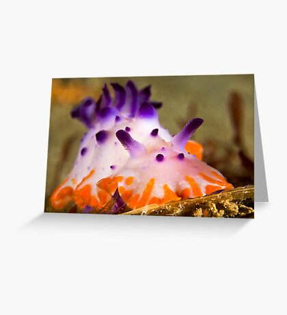 Orange-Barred Mexichromis Greeting Card