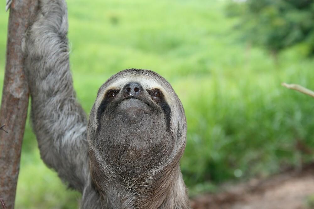 Sloth by burtmon99