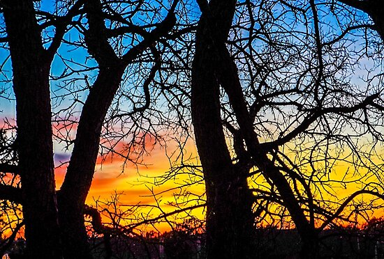 sunset beyond the trees by Spiraleffects
