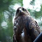 Eyes of a Predetor by rickvohra