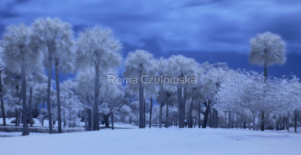 Palm trees in infrared by Roma Czulowska