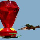 Hummingbird approaching feeder by MaluC