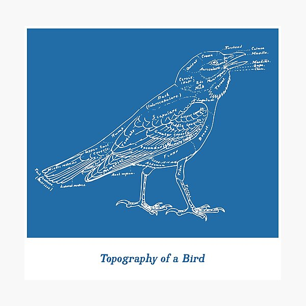 Topography of a Bird Photographic Print