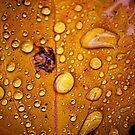 Wet Leaf by redda