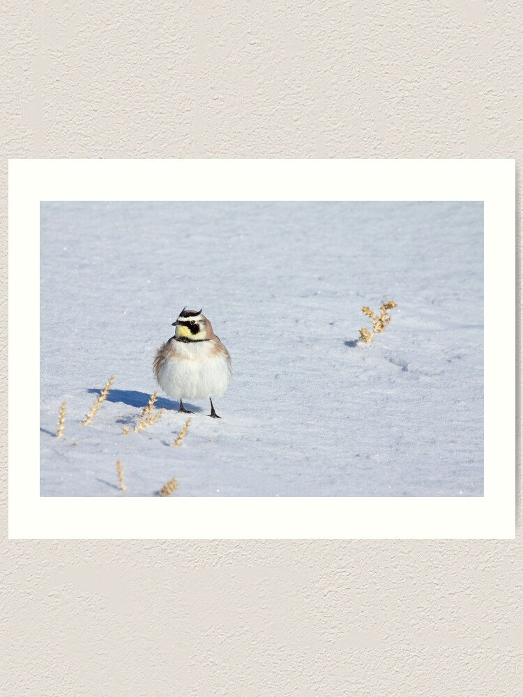 Alternate view of Mr. Horned Lark Art Print
