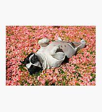 Daphney Photographic Print