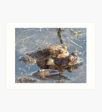 American toads mating. Art Print