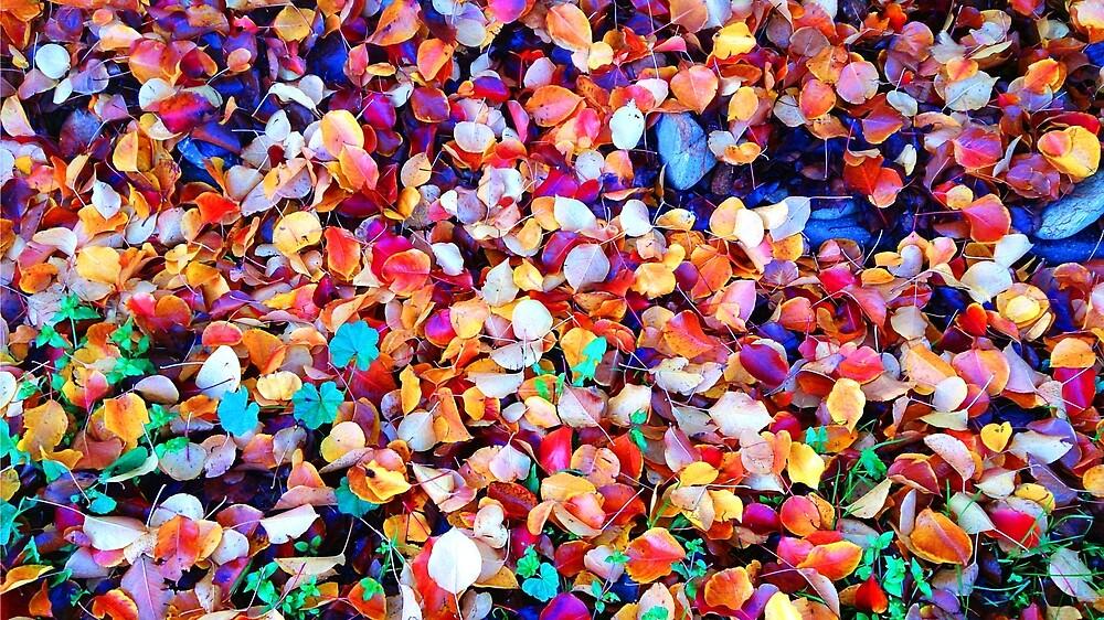 Autumn days. by redda