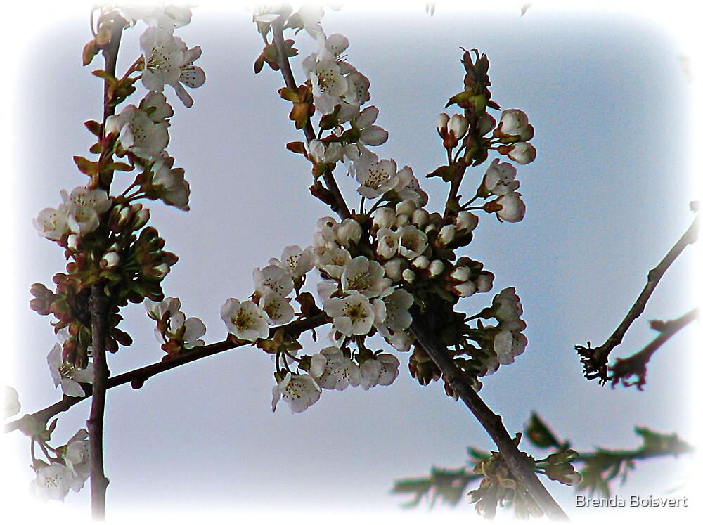 ~ Cherry Blossom Time ~ by Brenda Boisvert