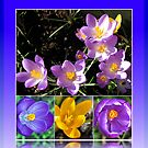 Spring Crocus Collage in Reflection Frame von BlueMoonRose