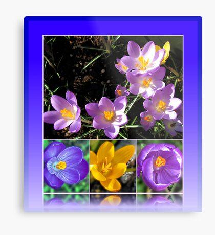 Spring Crocus Collage in Reflection Frame Metallbild