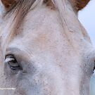 THROUGH THE EYES OF A HORSE.... ? by Magriet Meintjes