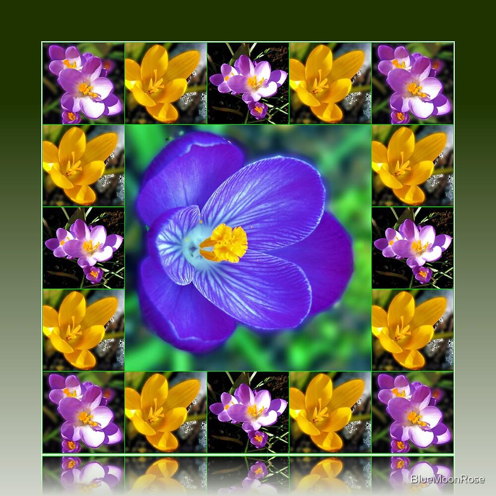 Crocus Collage in Reflection Frame von BlueMoonRose